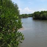 Mangroven Gebiet