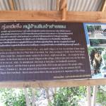 Mangroven Gebiet auf Koh Lanta