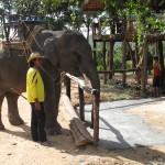 Elefantencamp auf Koh Lanta